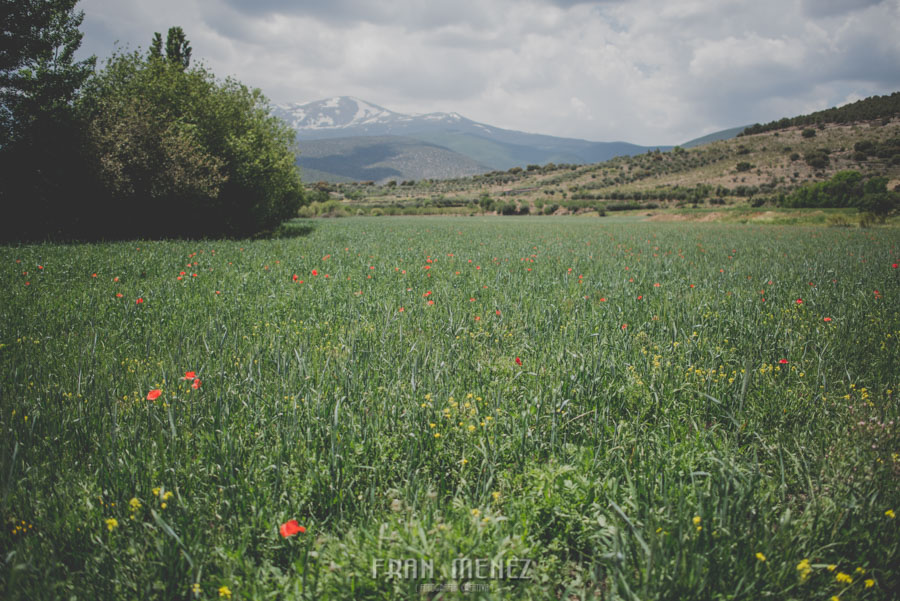 Fran Menez Fotografo de Bodas en Jerez del Marquesado. Fotografo de Bodas en Guadix. Fotoperiodismo de Bodas. Hacienda del Marquesado 80