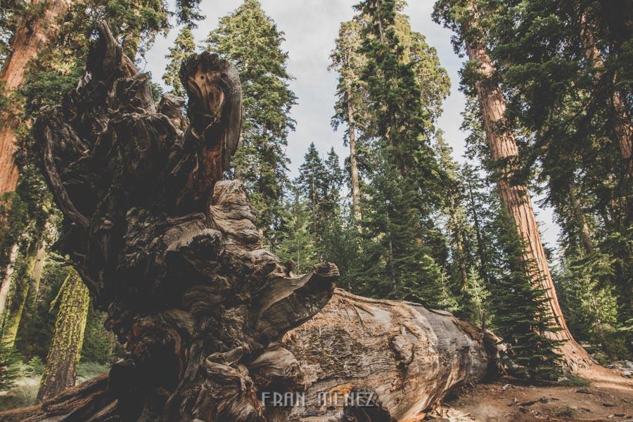 Ruta de los Parques del Oeste. Viajar a EEUU Yosemite Grand Canyon Monument Valley Zion San Francisco Las Vegas Los Angeles Lake Powell 170
